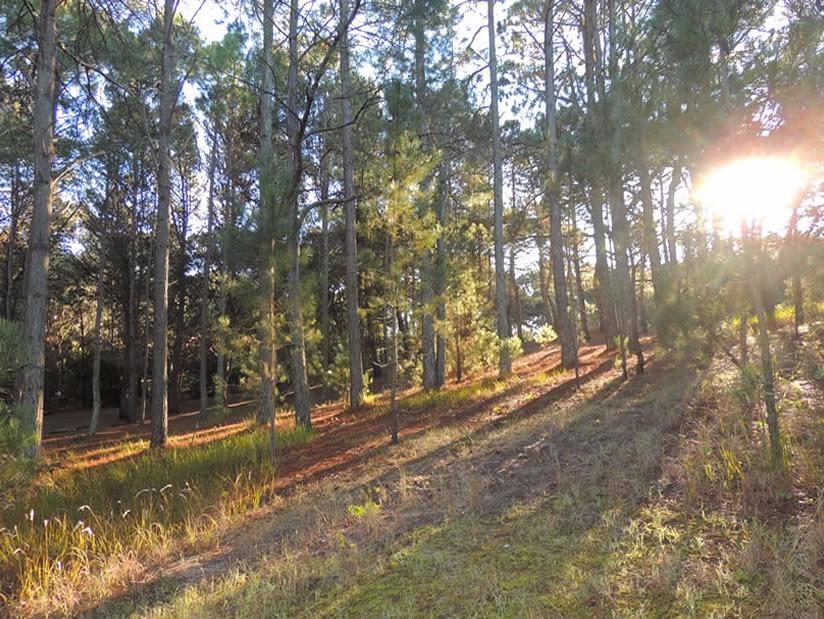 Reserva Forestal Mar de las Pampas